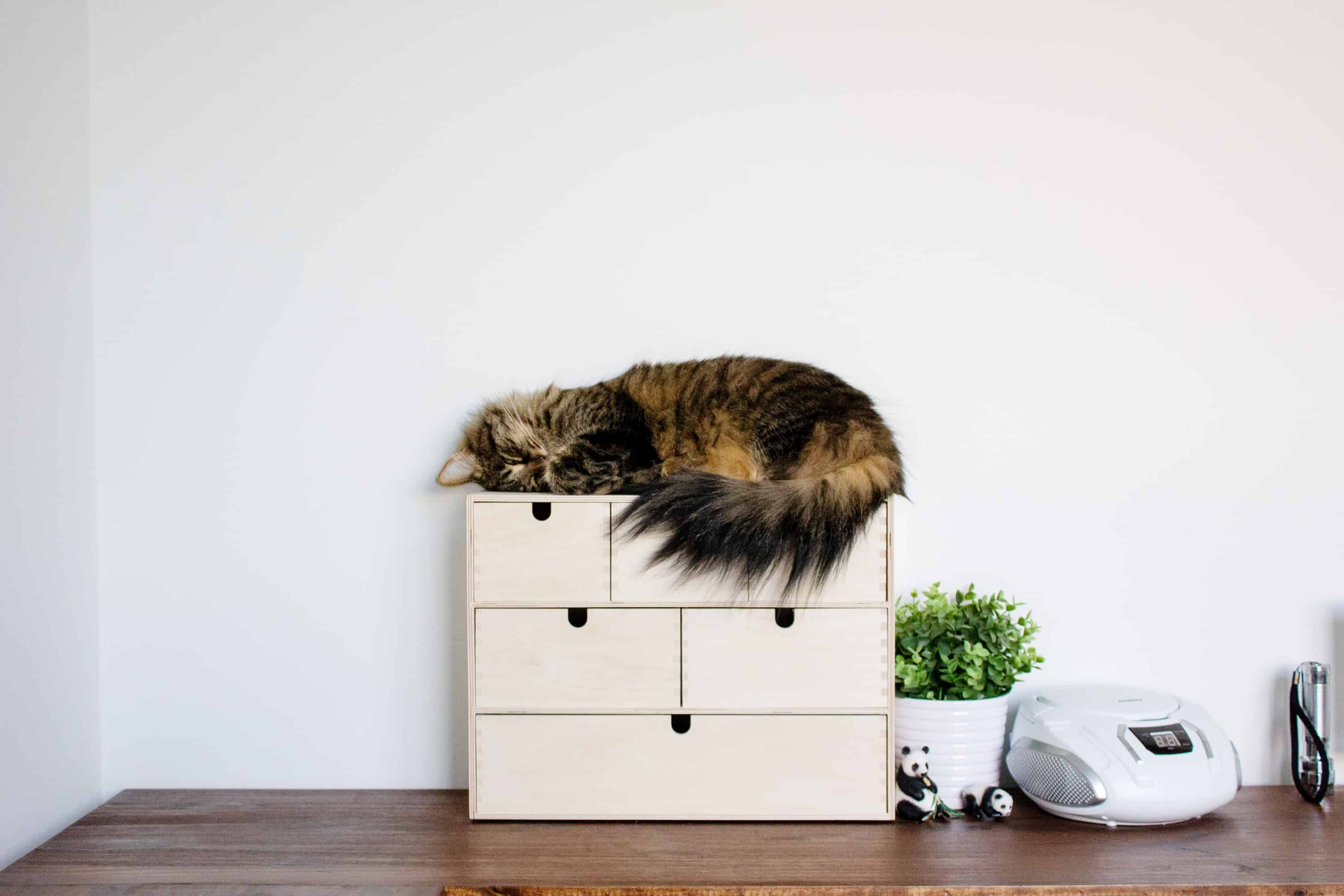 cat sleeping on new corner IKEA hack desktop in homeschool room